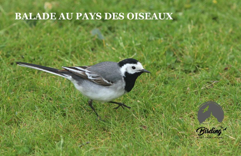 visite guidée oiseau manche