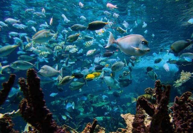 cite de la mer cherbourg Aquarium