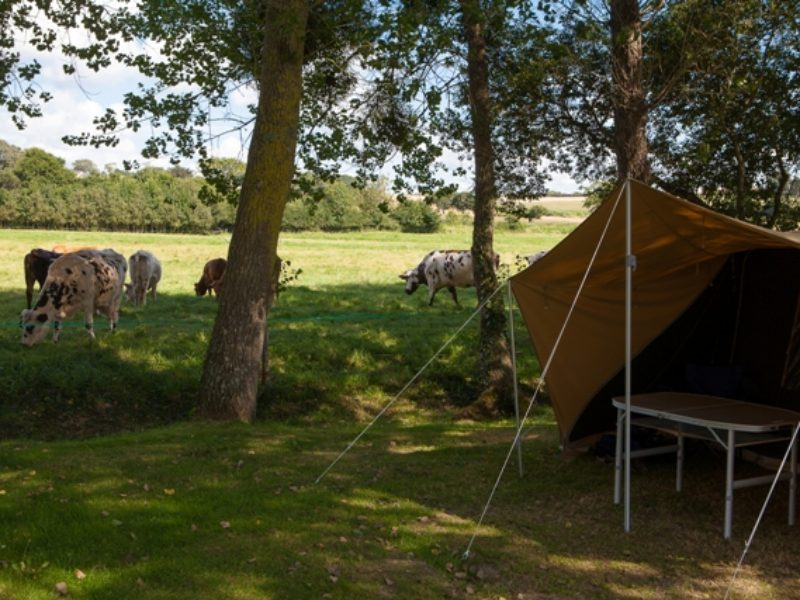 Standaard Campingplaats