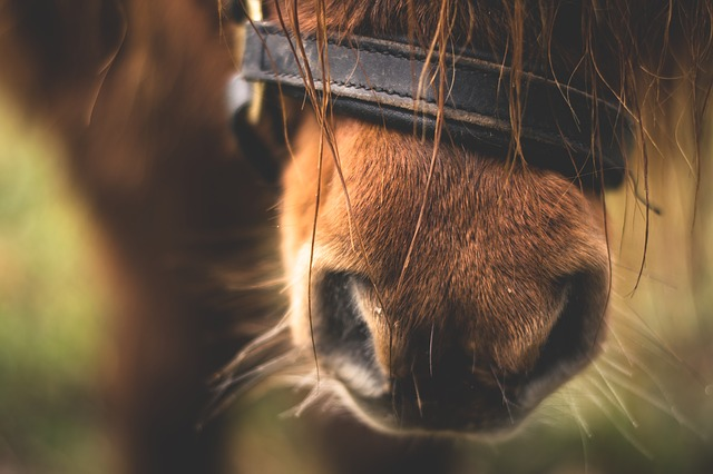 equitation vacances normandie granville