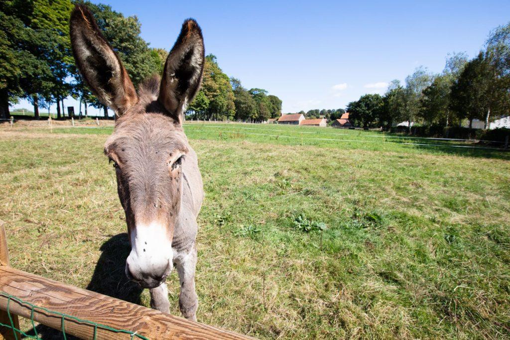 camping ferme âne campagne normandie