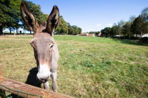 camping à la ferme normandie âne