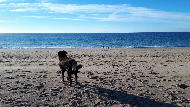 Louez un mobil home ou emplacement de camping au cœur de la baie du Mont Saint Michel dans un camping 5 étoiles « Dog-Friendly » où les chiens et chats sont acceptés… et c'est gratuit !