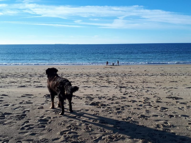Rent in a 5-star camping «Dog-Friendly», to which dogs and cats are accepted… and it is free!