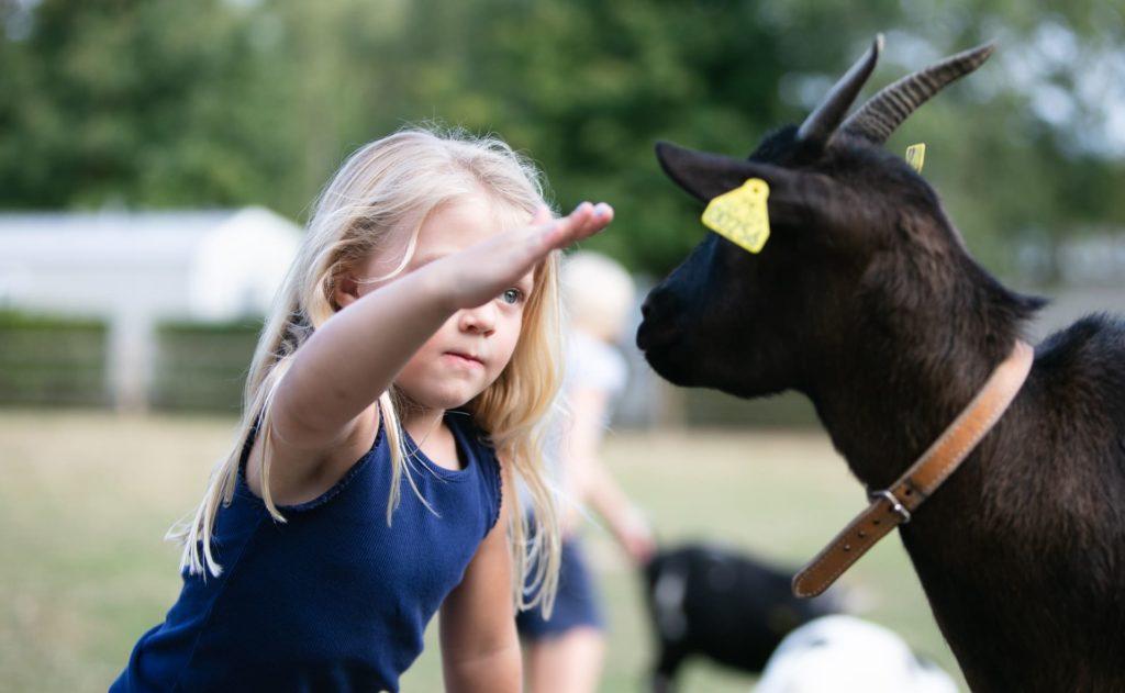 enfant caresse chèvre